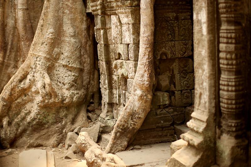 Angkor Ta Prohm, Angkor Archaeological Park, Krong Siem Reap, Cambodia