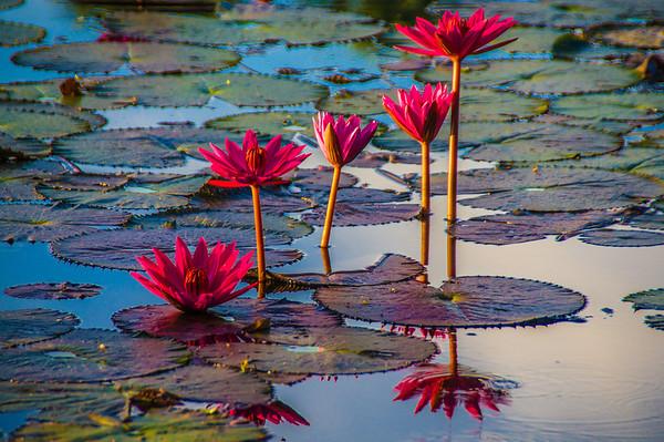 Flowers, Angkor Wat, Cambodia