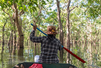 Flooded Forest, Tonle Sap