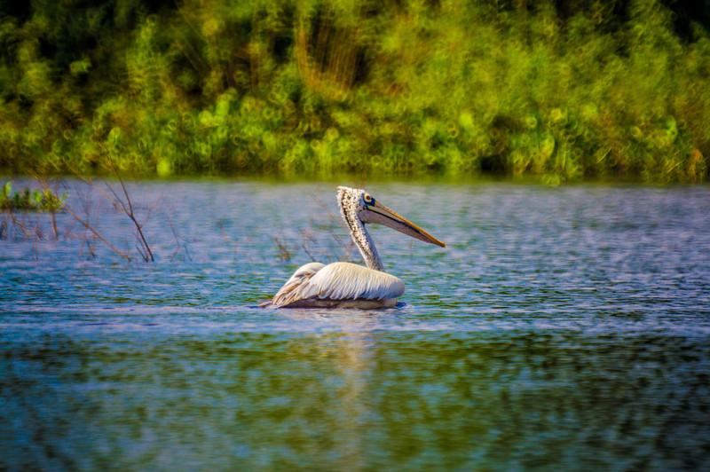 Preak Tol Bird Sanctuary, Cambodia