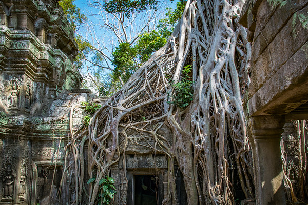 Ta Prohm.  (The Jungle Temple)