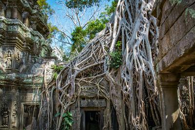 Ta Prohm.  (The Jungle Temple)