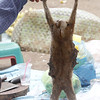 slow loris, used medicinally for pregnancy, Stung Treng market, Mekong River, Cambodia, 3/24/13
