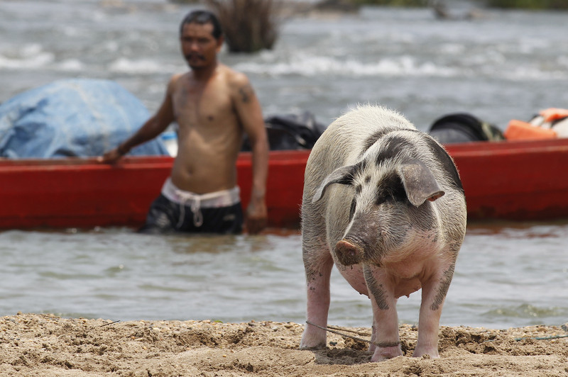 Curley, Bo and a pig, Koh Preah