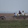 tractor cart, Stoung Chi Kraeng grasslands, Cambodia