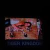 Tiger Kingdom is a front for the illegal trade in tiger parts, TOTALLY DISGUSTING!
