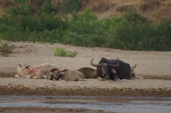 Mekong 2011