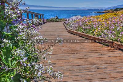 cambria boardwalk 1768-