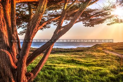 cambria tree 9525-
