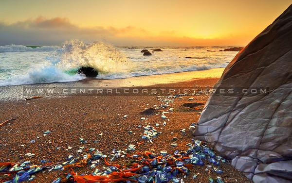 Cambria & Moonstone Beach