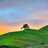 oak tree sunset 8375-