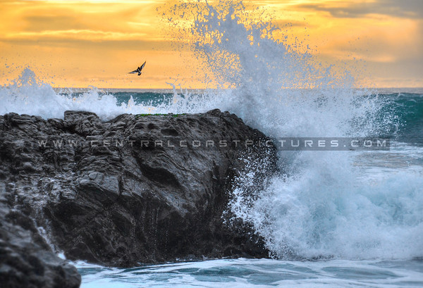 cambria-moonstone-beach_3166