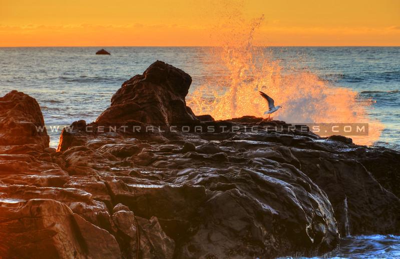 splash-cambria_2801