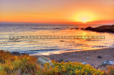 cambria-sunset_4387