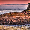 cambria sunset-