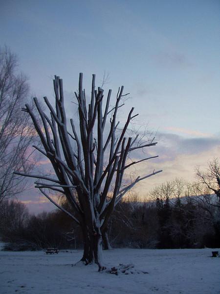 tree_at_dusk.jpg