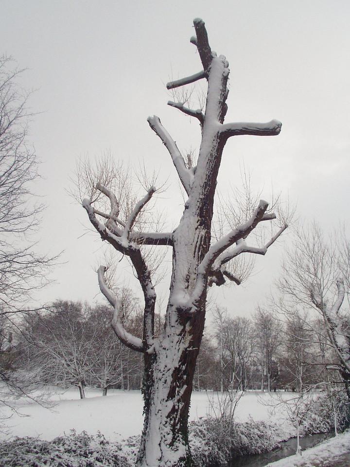 funny_tree.jpg