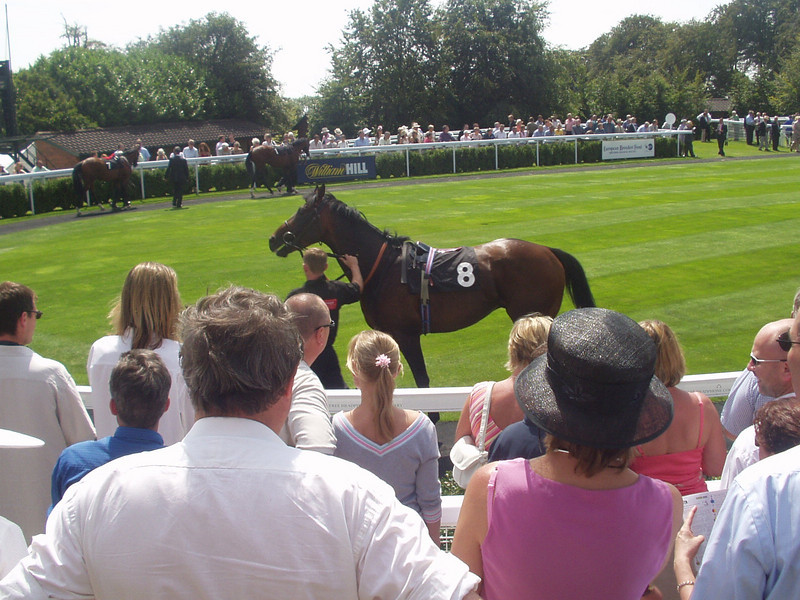 Horse (doh)