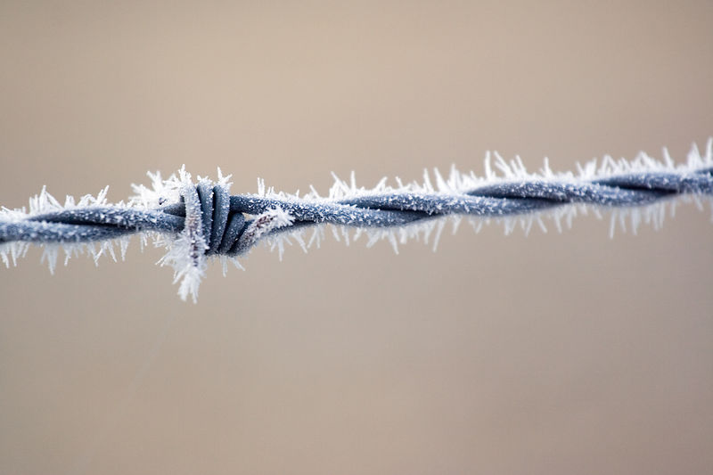 Ice crystals on the barbed wire, at the edge of the path on the way to the Cavendish. <br /> <br /> 70-200L on the 350D