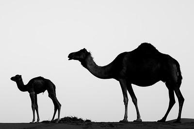 Silhouettes ... UAE