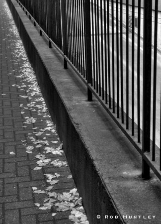 "B&W version. Railing and leaves along a sidewalk between two major streets in downtown Ottawa.  Cityscapes outing of the Camera Club of Ottawa.  <a href=""http://www.robhuntley.ca/Stock-Photography/City-Scenes/City-Scenes/4486745_mNfr5#716128519_zoj5b"">See a colour version here</a>.  © Rob Huntley"