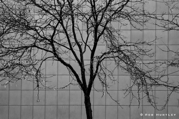 "B&W version. Tree against a tiled wall. A few remaining leaves and some yellow Christmas lights add a bit of colour to this late November image. Alterna Savings (formerly CS-Coop) building on Albert Street in Ottawa, Ontario.  Cityscapes outing of the Camera Club of Ottawa.  <a href=""http://www.robhuntley.ca/Stock-Photography/City-Scenes/City-Scenes/4486745_mNfr5#716122250_zfEed"">See a colour version here</a>.  © Rob Huntley"