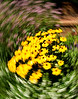 This was flowers in a garden bed.  I shot this by focusing on the center then actually twirling my camera.  Settings f16, 1/40 sec., at ISO 200