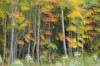 Autumn tapestry, Monck Rd, near Bancroft