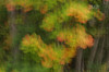 Autumn swirls, Oxtongue Rapids