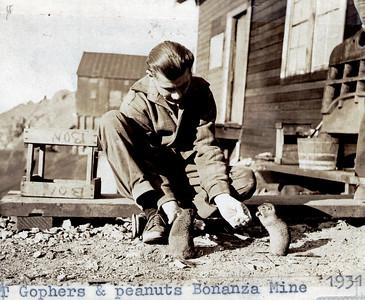 Gophers and Peanuts 1931 Bonanza