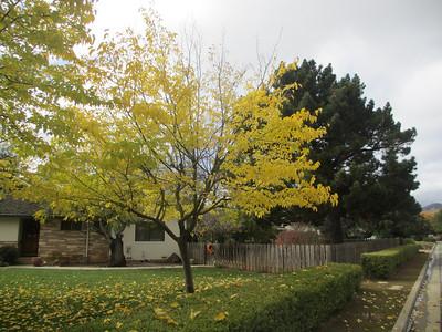 Canon Elph310 Nov 17:2012 03