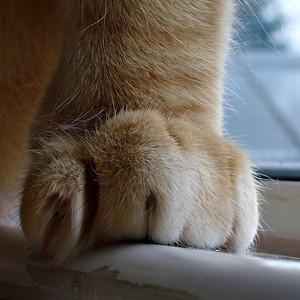 Big paws on that Hugo...