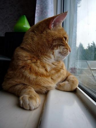 Hugo watching the snow