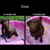 From little rhino to beautiful dog.