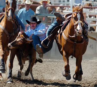 Keenan Walhert tries his hand at steer wrestling during the senior boys competition on Sunday. The 2009 Little Britches Rodeo was held this weekend at the Boulder County Fairgrounds in Longmont and was sponsored by the Elks #1055 Lodge.   Cliff Grassmick / June 28, 2009