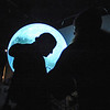 "MOON05.JPG MOON05<br /> An attendee is silhouetted in front of the ""Science on a Sphere"" globe at the University of Colorado Fiske Planetarium, which was illuminated to show the moon after NASA crashed a spacecraft into a deep crater at the moon's pole. About 200 Boulder County residents gathered at the planetarium and the Sommers-Bausch Observatory early Friday morning to watch the event. FOR MORE PHOTOS AND VIDEO GO TO  <a href=""http://WWW.DAILYCAMERA.COM"">http://WWW.DAILYCAMERA.COM</a><br /> Photo by Marty Caivano/Camera/Oct. 9, 2009"
