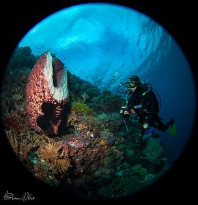 Sponge cross section- freshly sliced