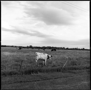 Hasselblad R_13 Acros 100 HC110 South Dakota 7-9-17 001