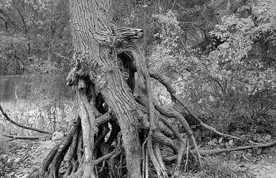 Leica M2 R_21 Acros 100 Pushed 400 HC110 Minnehaha Falls 10-23-16 015