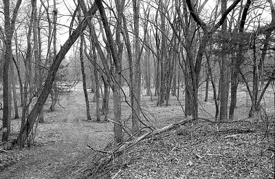 Main Trail through trees just past Bee Hives.