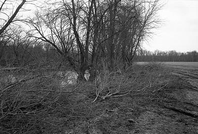 Brush along Elk River