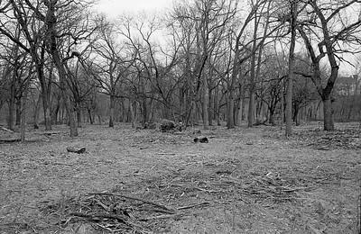 Big Oak Tree Stump