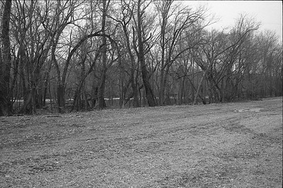 Tree line along Mississippi.  DNR island seen through the trees.