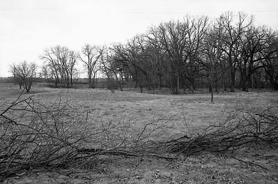 Big Park. Looking toward field.