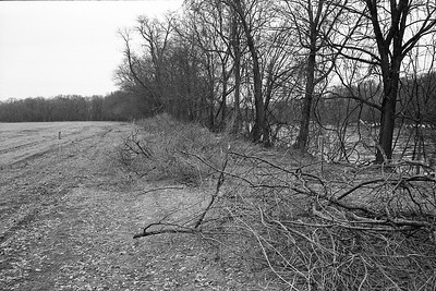 Looking Back at cleared Brush along Mississippi.