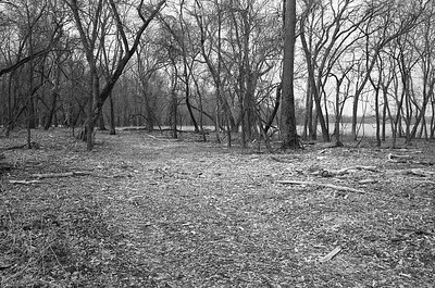 Road Through Trees by corner of the field.