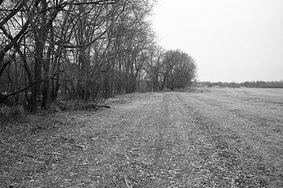 Cleared brush from along Mississippi.