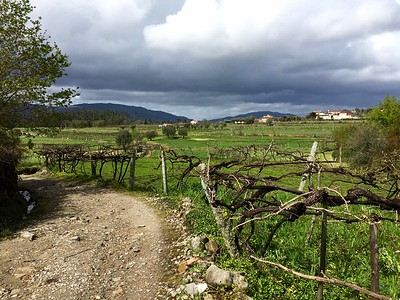 On the camino in Portugal.