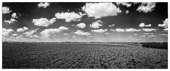 Endless Fields and Sky