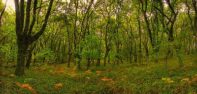 Galacia Woodlands